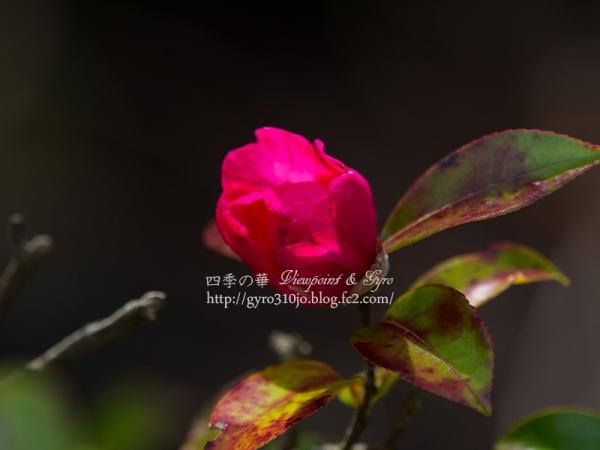 相模川自然の村公園 B