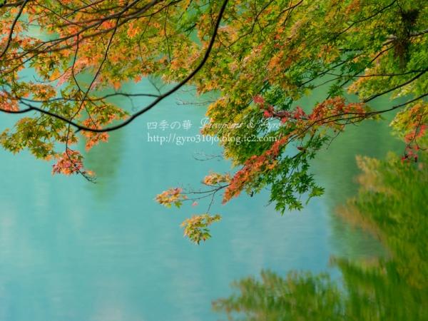 南伊奈ヶ湖 D