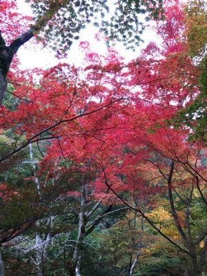 有馬温泉 瑞宝寺公園 紅葉写真(1)