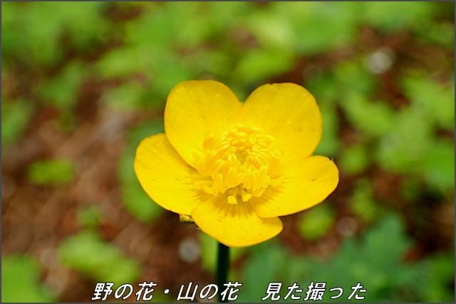 s-O20160614-125950-0.jpg