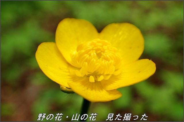 s-O20160614-130000-0.jpg