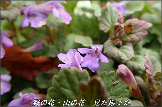 s-O20160614-141336-0.jpg