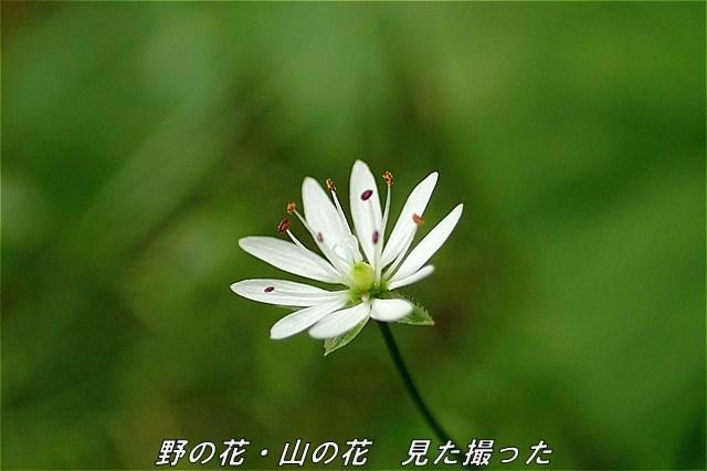 s-O20160721-131159-0.jpg