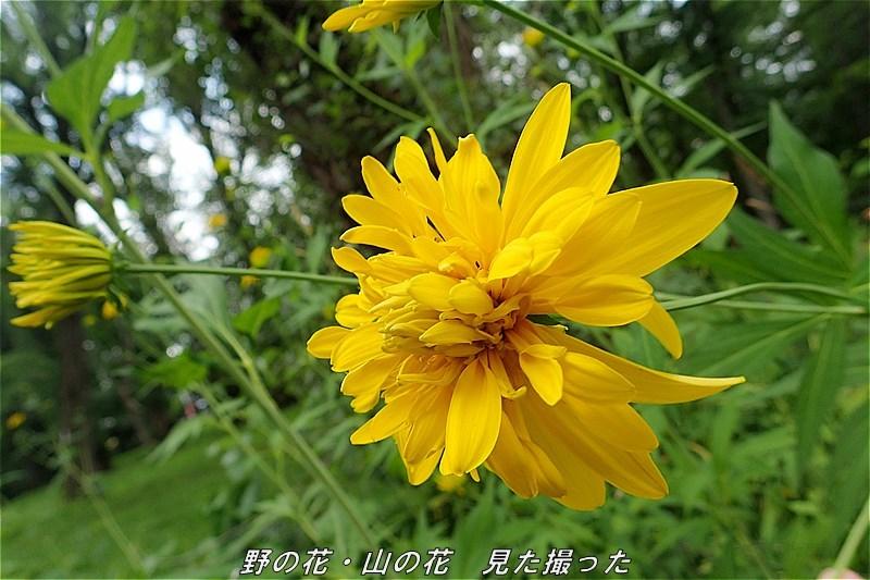 s-O20160731-151659-0.jpg