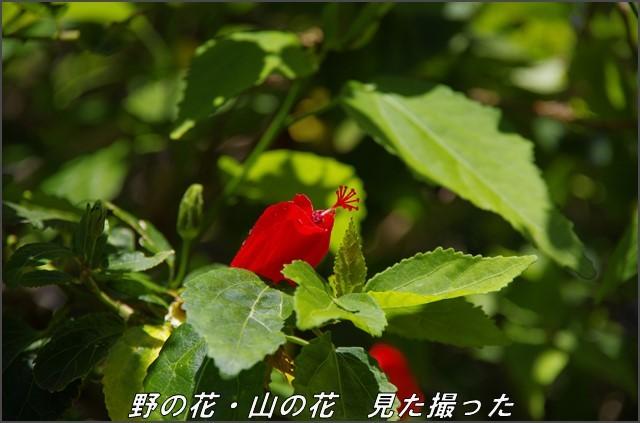 s-P1027-121131-2.jpg