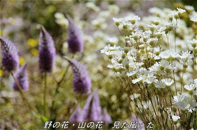 s-P1101-134449-b.jpg