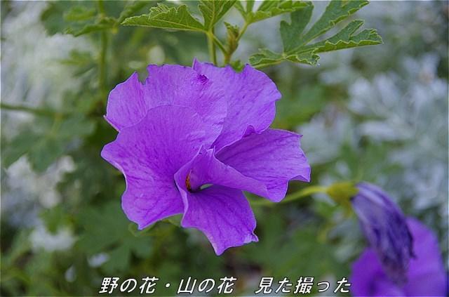 s-P1101-141353-b.jpg