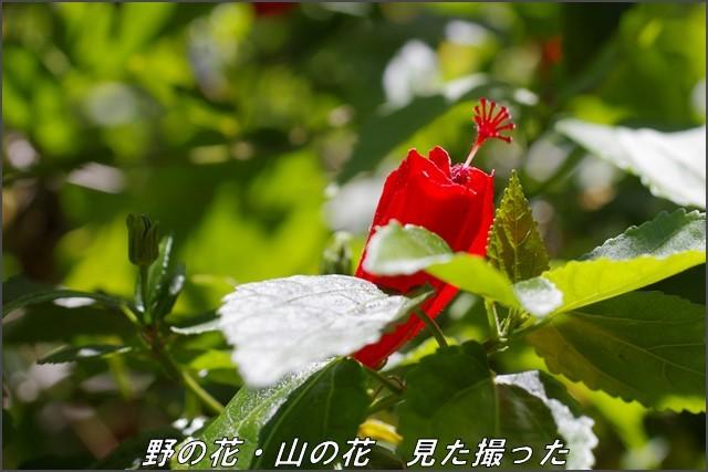 s-P20131027-122053-2.jpg