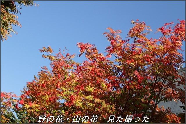 s-TG-320161001-131017-0.jpg