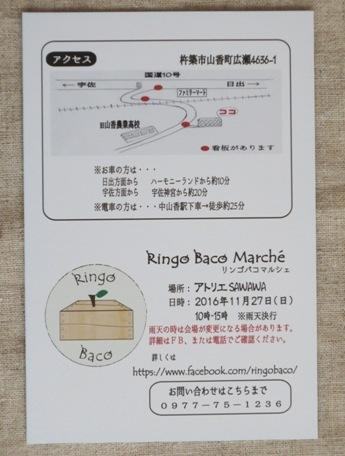 ringo-2.jpg