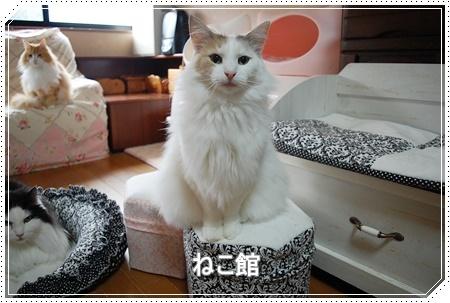 blog10_20161111104847922.jpg
