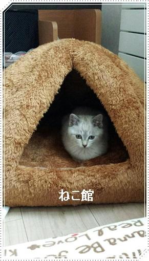 blog10_20170113094445c20.jpg