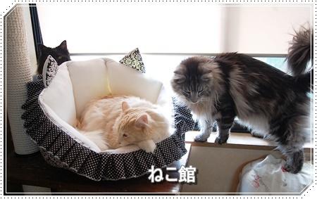 blog3_201611161256538a9.jpg