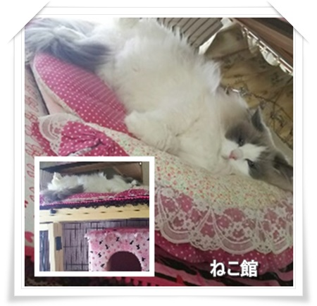 blog3_20161129152725d7c.jpg