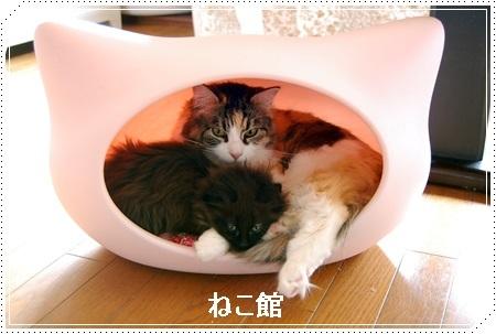 blog3_201612272147123ab.jpg