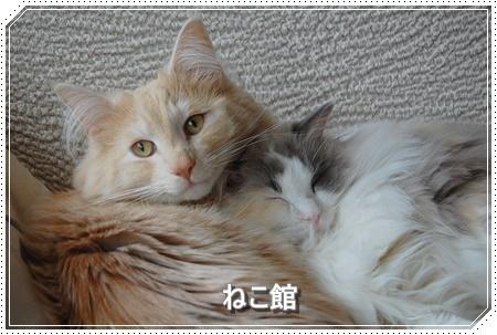 blog6_2016112213253156d.jpg