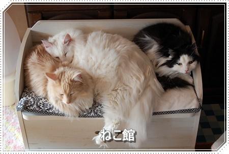blog7_201611111048272ca.jpg