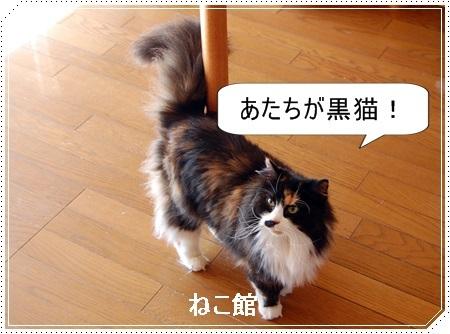 blog7_20161227220927fe4.jpg