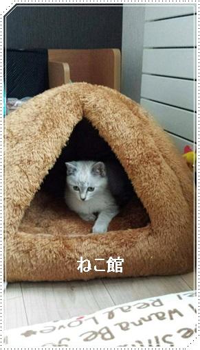 blog9_20170113094444726.jpg