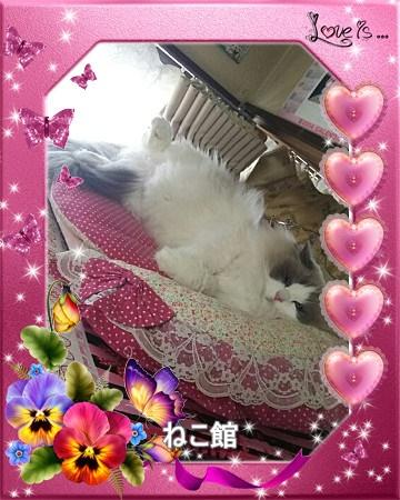 blog_201611291527222ed.jpg