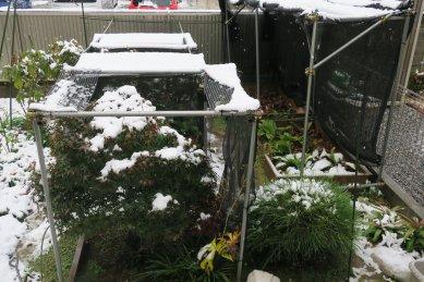 コオズ畑に吹き込んだ雪