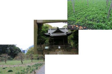 梅林・旧稲生神社・お花畑
