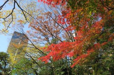 後楽園入口の紅葉