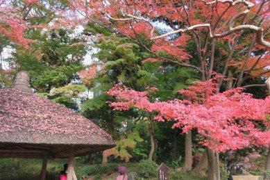 丸屋横の紅葉