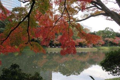 沢渡り辺りから見た大泉水と紅葉