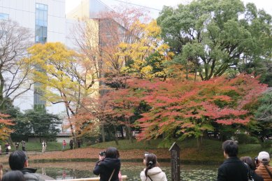 内庭の紅葉