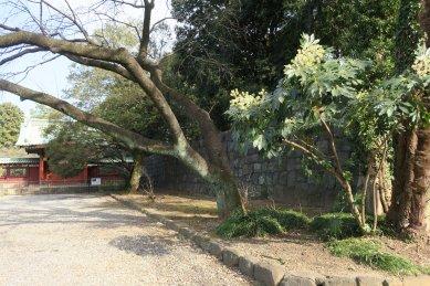 寛永寺特別参観・常憲院霊廟勅額門と石垣