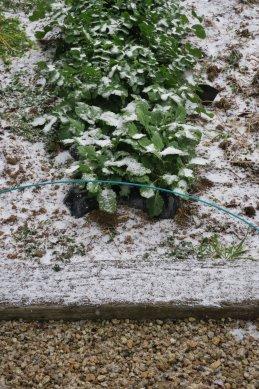 野菜畑の雪と手前伊勢砂利の庭