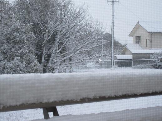 1月15日積雪2