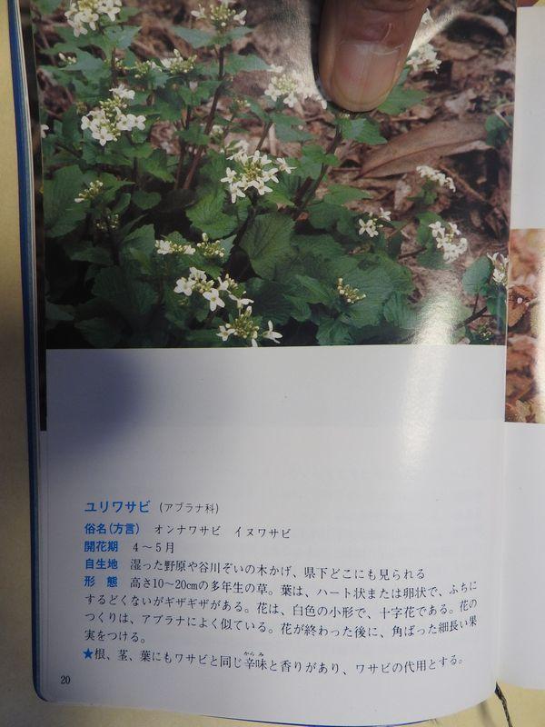 DSCN3424.jpg