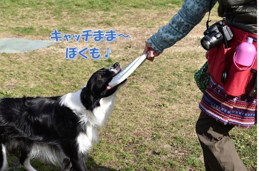 3_20161229001946a0e.jpg
