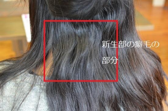 1DSC_0061_6440.jpg