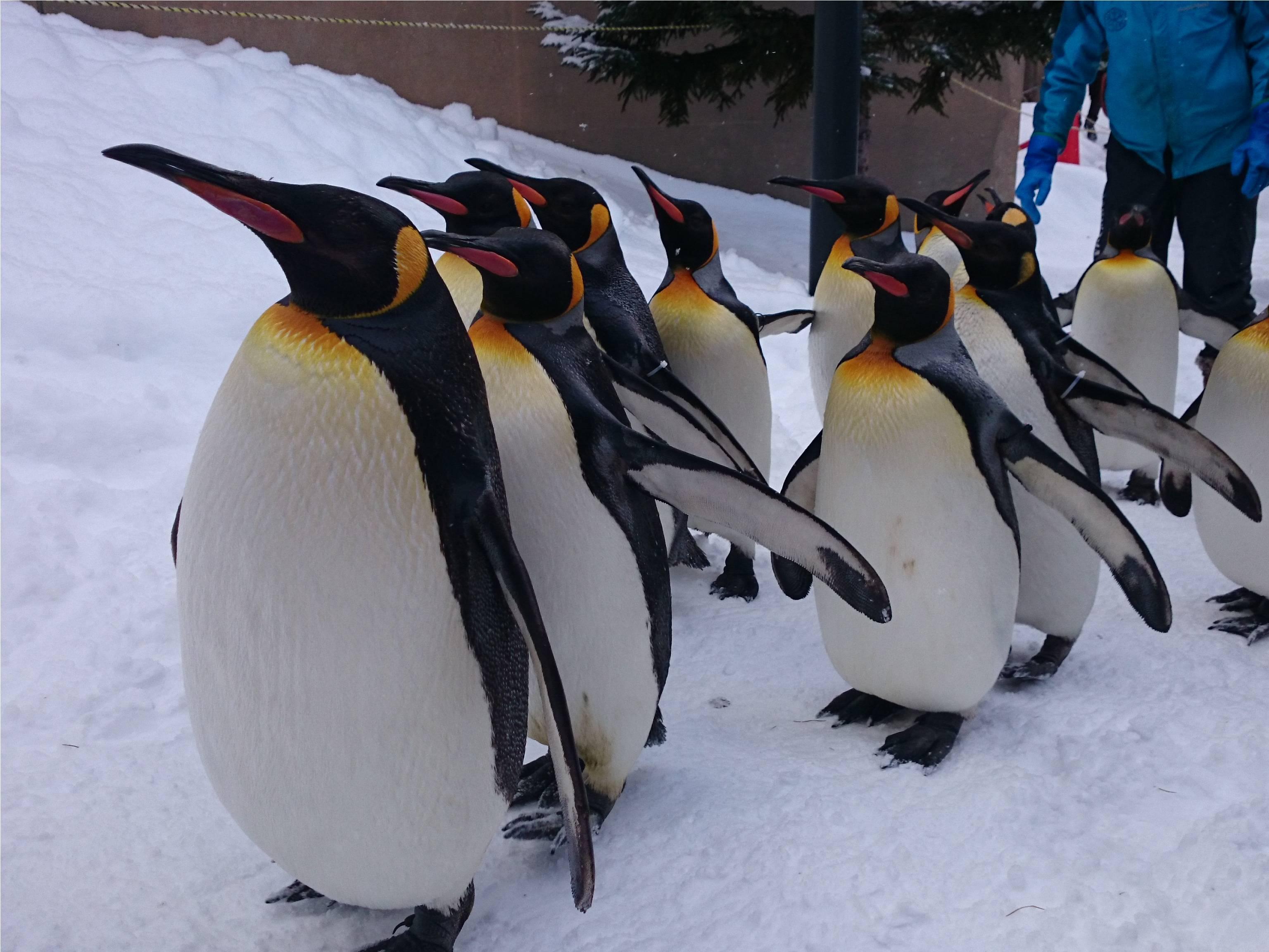 ペンギン09