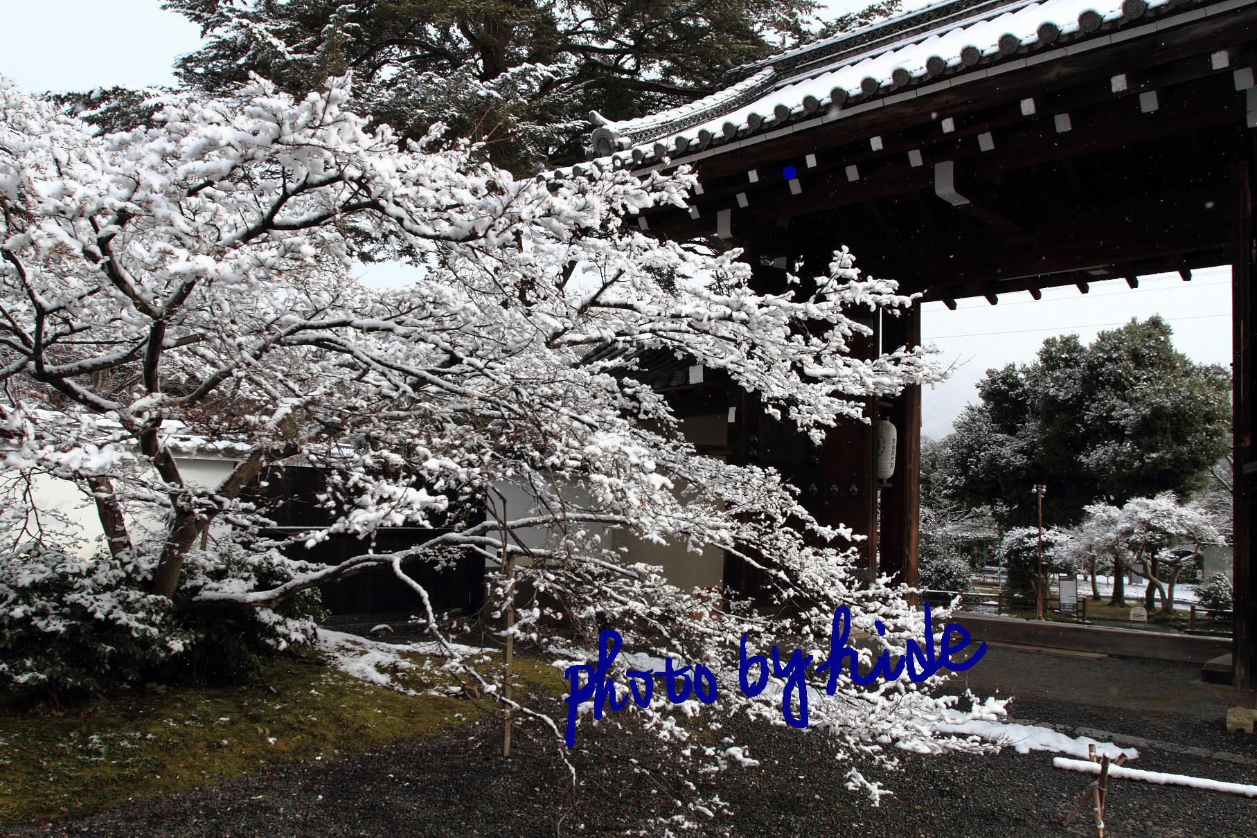 京都実相院4