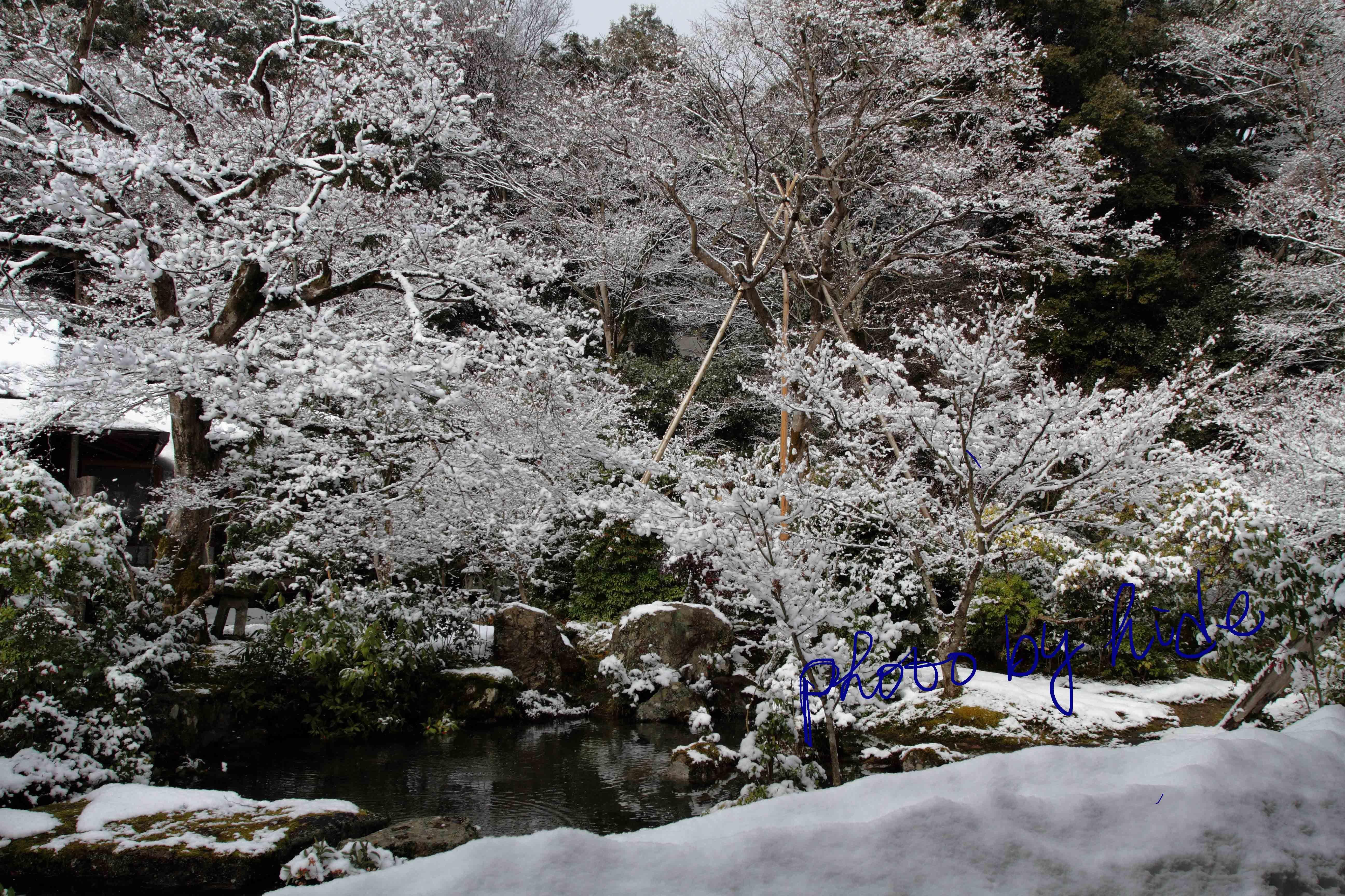 京都実相院6_edited-1