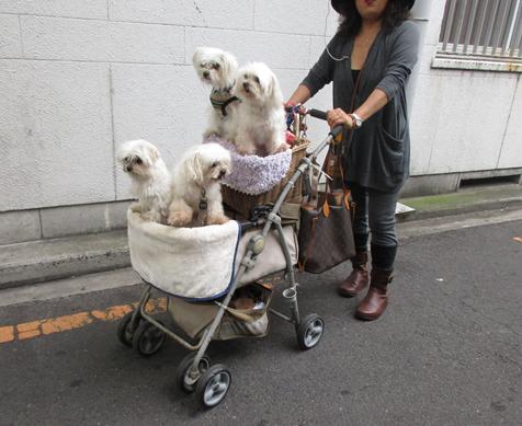 20161120ワンちゃんの散歩