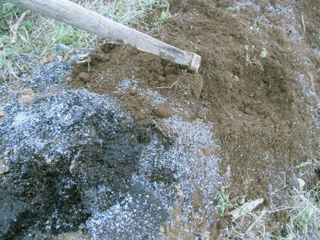 トウガラシ跡地を耕している