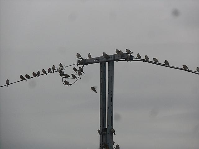 小鳥がいっぱい