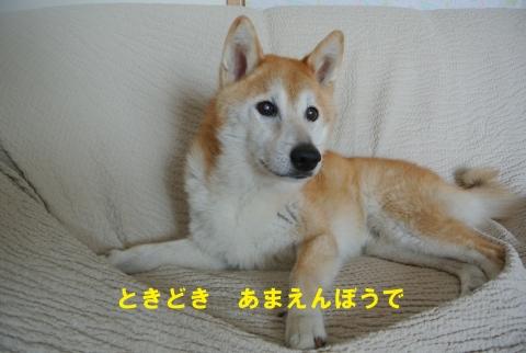 3あまえんぼう_2