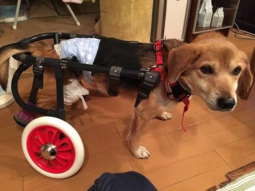 えんちゃんの車椅子