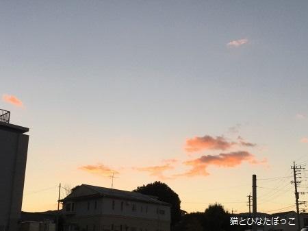 IMG_2578.jpg