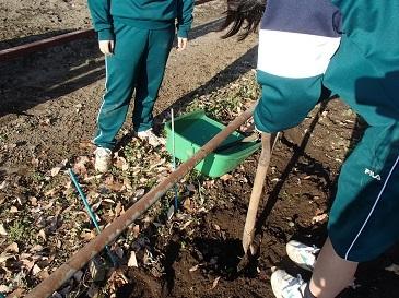 定植用穴掘り
