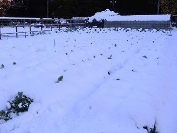 史上初の11月積雪