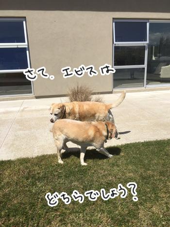 02012017_dog5.jpg