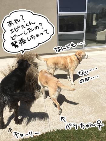 02012017_dog6.jpg