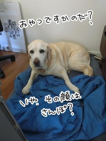04022017_dog7.jpg